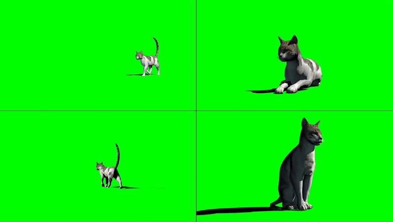 绿幕视频素材猫咪