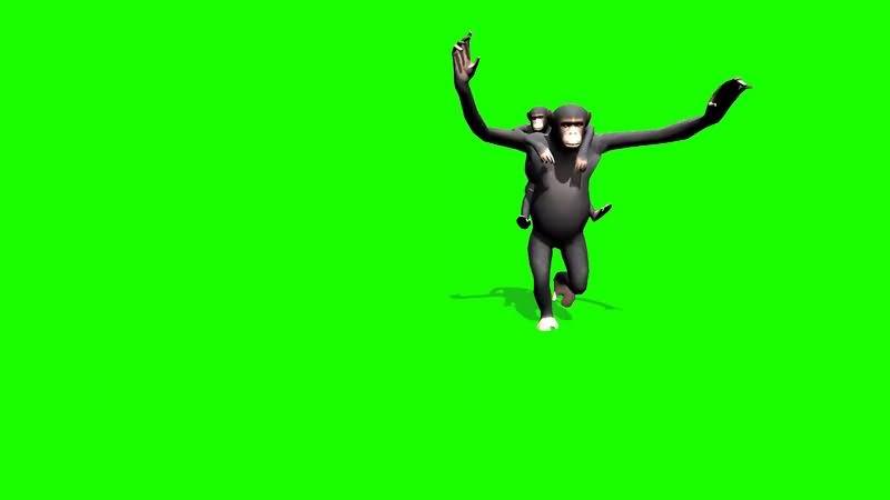 绿幕视频素材猴子