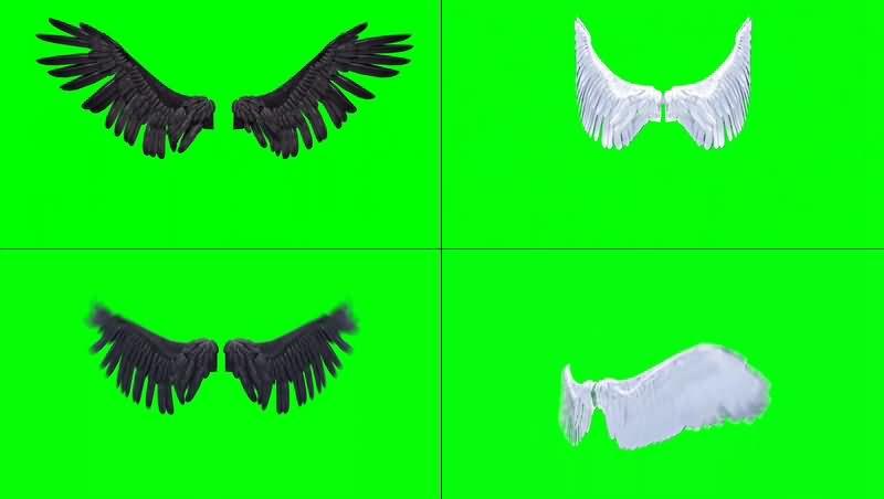 绿幕视频素材翅膀