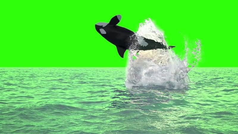 绿幕视频素材鲸鱼.jpg