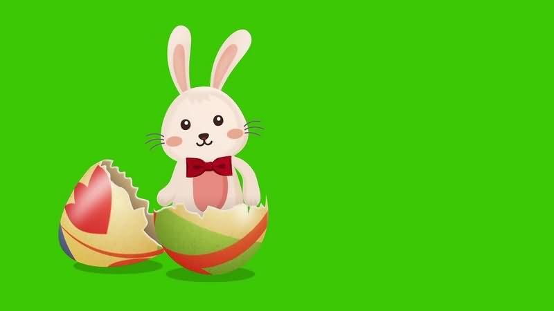 绿幕视频素材复活节兔子