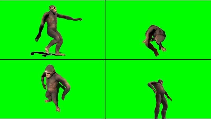 绿幕视频素材猩猩