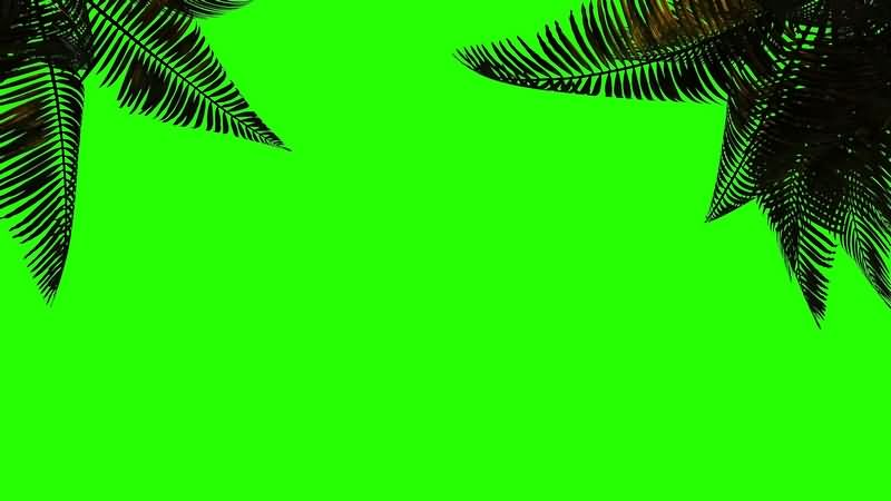 绿幕视频素材椰子树