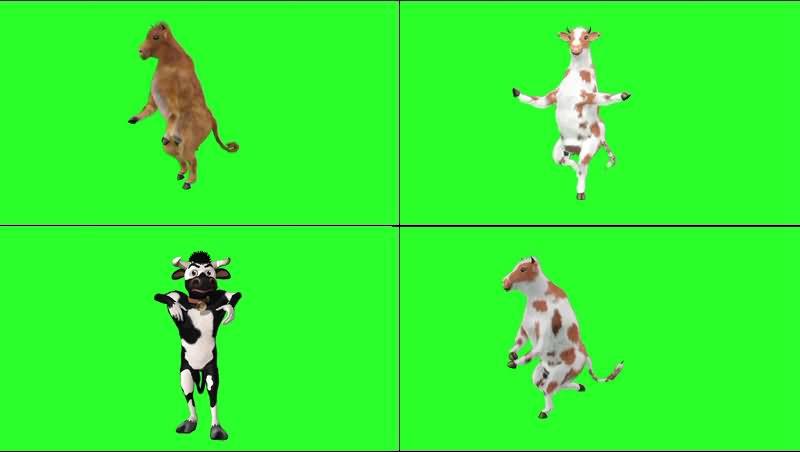 绿幕视频素材跳舞奶牛.jpg